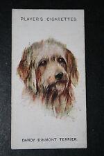Dandy Dinmont  Terrier 920's Vintage Dog Portrait Card  # VGC