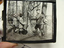 vintage magic lantern slide---tapping trees for maple syrup