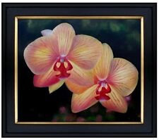 Framed Quality Hand Painted Oil Painting Pink/Yellow Orchids 20x24in