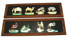 c1850 cased set of 12 hand painted magic lantern slides - 48 animals