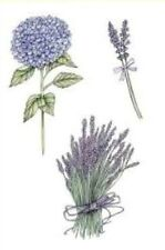 Craft Emotions Clear Rubber Stamps A6 Hydrangeas & Lavender - Flowers Nature