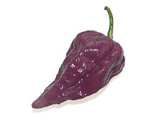 10 Quality Seeds - PURPLE BHUT JOLOKIA / Naga Jolokia Ghost Chilli