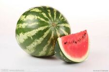 1 Pack 50 Watermelon Seeds Water Melon Citrullus Lanatus Organic S009