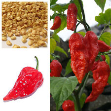 20 Bhut Jolokia Ghost Peppers Seeds Chili Rare Sowing Balcony Vegetable Fruit