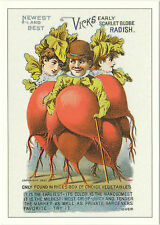 ROBERT  OPIE  ADVERTISING  POSTCARD  -  VEGETABLE  SEEDS  -  VICKS