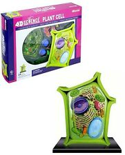 Plant Cell 4D Model by Tedco Toys!