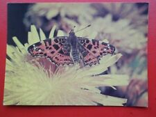 POSTCARD ANIMALS MAP BUTTERFLY
