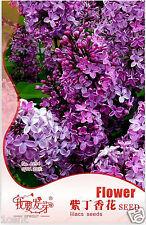 100 seeds of lilac Syringa French Vulgaris Flower Shrub Bush
