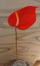 Anthurie rot Flamingo -Seidenblumen -künstliche Blumen-Deko