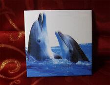 Dekofliese Wandbild Bildfliese Geschenkidee Delfin Delfine (032DP)