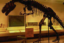 608056 Allosaurus Carnegie Museum Pittsburgh Pennsylvania A4 Photo Print