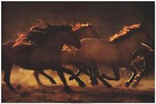 Into The Light by Tony Stromberg Fine Horse Art Print Poster Home Decor 705014