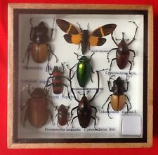 REAL EXOTIC HUGH 9 INSECT DISPLAY TAXIDERMY ENTOMOLOGY CICADA BEETLE INSECTS