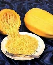 20 VEGETABLE SPAGHETTI NOODLE SQUASH Seeds Gourmet Heirloom Organic No GMO RARE