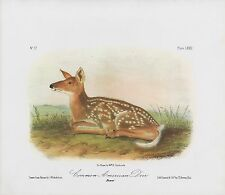 "1989 Vintage ""COMMON AMERICAN DEER"" FAWN AUDUBON MAMMAL COLOR Art Lithograph"