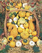 2g (appr. 30) ornamental pumpkin and gourd seeds CUCURBITA PEPO a lot of colors