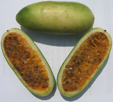 Banana Passion Fruit Seeds - Rare Tropical - Passiflora Mollissima - 10 Seeds