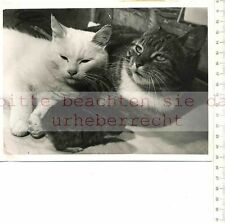 ORIGINAL PRESSEFOTO: 1958 CATS LIVING WITH RABBITS at MANORHOUSE RADNORSHIRE