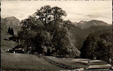 Ramsau bei Berchtesgaden AK 1959 Partie an der Hindenburg-Linde Baum Botanik