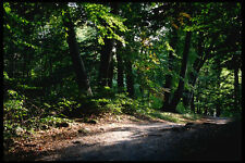 222048 The Vienna Woods On The Outskirts Of Austrias Capital A4 Photo Print