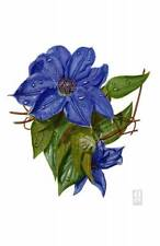 "ORIGINAL RICHARD HARPUM M.A ""Clematis"" Jackmanii Flower Watercolour PAINTING"