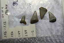 """1.56"""" to 1.12"""" Large Megalodon Shark Tooth Fossils -Giant Exctint Mako - 4 Teeth"""