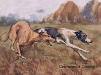 GREYHOUND CHARMING DOG GREETINGS NOTE CARD,TWO BEAUTIFUL RUNNING DOGS
