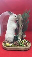 SALE! ANTIQUE VICTORIAN INSPIRED TAXIDERMY Rabbit in Glass dome-frog-butterfly