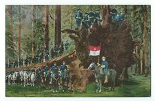 Postcard U.S. Cavalry and Fallen Monarch, Mariposa Big Tree Grove, California