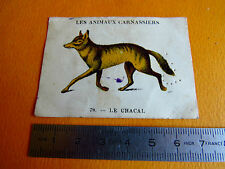 CHROMO 1939 CASINO LES ANIMAUX CARNASSIERS N°79 LE CHACAL