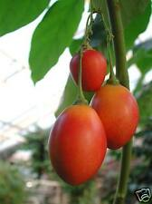 Tamarillo, Tree Tomato Seeds Edible Fruit plus Recipes Easily Grown-Cyphomandra