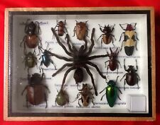 REAL EXOTIC HUGH 14 INSECT DISPLAY TAXIDERMY ENTOMOLOGY SPIDER BEETLE INSECTS