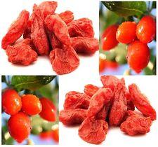 Ninxia Goji Berry Seeds ( Lycii  WOLFBERRY ) -  Lycium Barbarum - Combined S&H