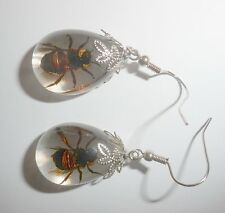 Insect Pair Earring - Honey Bee (Apis mellifera) Specimen Clear