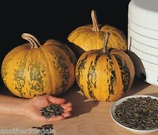 KAKAI PUMPKIN 15 SEEDS HULL-LESS SEEDS EASY TO GROW AND THEY'RE DELICIOUS TO EAT