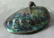 New Zealand Paua Shell Ornament with a silver Kiwi Bird fixed to top