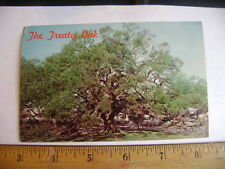 1950's postcard -  The Treaty Oak, Jacksonville, Florida