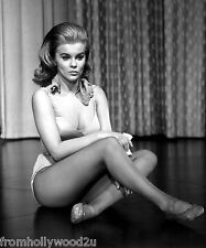 ANN MARGRET 8X10 PHOTO AM12