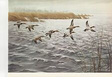 """1972 Vintage HUNTING """"AGAINST THE WIND 1969"""" MISSISSIPPI FLYWAY Color Lithograph"""