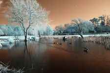 Nikon D80 Infrared converted 640nm Enhanced colour. DSLR infrared Body only