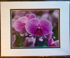 Color photograph of Orchids; Purple Flowers; Matted