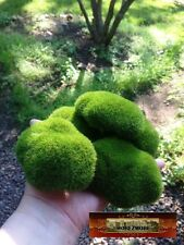 M00024 MOREZMORE 5 Artificial Fake Faux Emulation Moss Fuzzy Stones Balls Rocks
