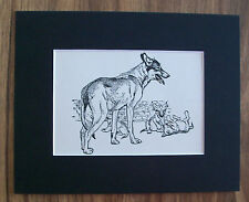 Wolf Wolves Print Winifred Austen 1935 Mom Pups Play Animal Bookplate 8x10 wMat
