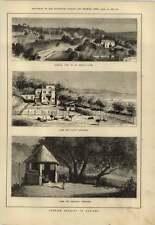 1879 cría de avestruz en Argel Park para jóvenes avestruces