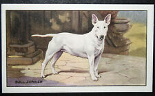 English Bull Terrier   Original 1930's Vintage Card  # VGC