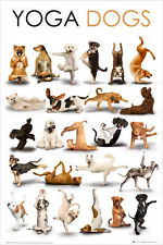 "Yoga Dogs POSTER ""61x91cm Pilates Vet Breeds Humour Pet"" NEW Licensed"