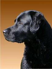 LABRADOR RETRIEVER Black Photo Refrigerator Magnet #1046