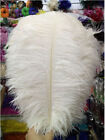 Wholesale 100-2000pcs Quality Natural white OSTRICH FEATHERS 12-14'inch/30-35cm
