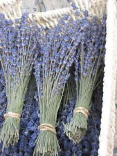 Natural Dried French Provence Fragrant Lavender Bunch Tied by Hand,