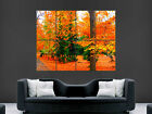 AUTUMN LEAVES TREES FOREST GIANT WALL POSTER ART PICTURE PRINT LARGE